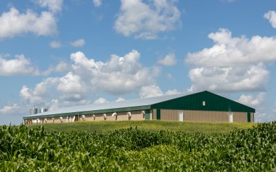 HyLife Grows Hog Production with ProVista Acquisition